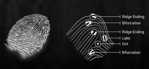 Your Fingerprints Reveal More Than You Think: Simona Francese